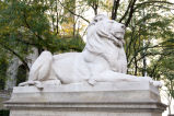 Lion, New York Public Library, 2008