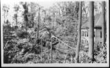 Post Card: Broken trees at Long Branch Park after the 1912 tornado