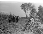 Town of Clay - Autumn day, harvesting corn with horse team, 5 of 12