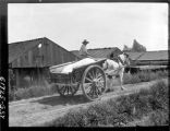 Gale solar salt worker driving a horse drawn dump cart