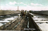 Colorized Post Card: Syracuse, N.Y., Salt Covers
