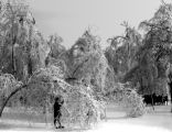 A boy standing within the drooping branches of an ice-coated tree