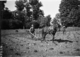 Cultivating Potatoes  Ray Morton Hoeing