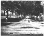 Elmwood Avenue looking west from Pulteney Street, home of the Rev. Miles P. Squire at the west end
