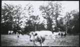 [Cows Owned By Lester H. Davis 1 of 8]