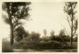 Flatlands: Indian well or mint [?] at Avenue W. between E. 74th Street and E. 75th Street, one...