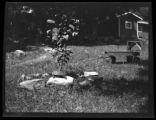 Westchester County: [turtles / tortoises sunning themselves in the garden of an unidentified...