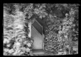 East Hampton, Long Island: [close angle on open doorway in unidentified heavily ivy-covered house,...