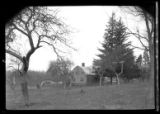 [Unidentified Dutch Colonial house on fenced, sloping property, undated. View through orchard...