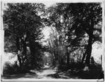 Bayshore, New York: Locust Valley Road, undated (ca. 1902).
