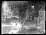 Alligator going down a slide, Savannah, Georgia, undated (ca. 1920).
