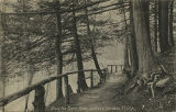 Along the Bronx River, Botanical Gardens, N.Y. City