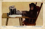 Chimpanzee at typewriter. New York Zoological Park