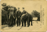 "African baby elephant ""Congo,"" Indian elephant ""Gunda."" New York Zoological..."