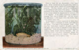 A small aquarium with water plants