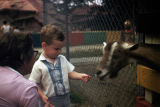 Child standing near goat at the Massapequa Zoo