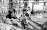 Margaret Foster with her mother Dorothy (Martin) Foster and dachshund digging in garden