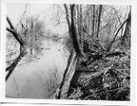 Chittenango Creek 1928