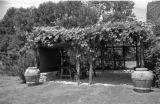 Arbor with grape vines and urns