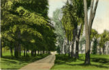Lovers Lane, Union College Grove