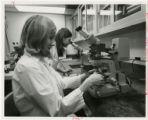 Techs at microscopes