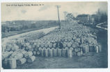 One of the Apple Yards, Medina, N.Y. [front caption] (1front) [e0503ac1]