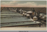 Scene at the Salt Fields, Syracuse, N.Y. [front caption] (1front) [e0235ac1]