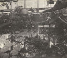 Lily Pond in the Home of Steinmetz